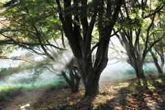 Herbststimmung im Rombergpark