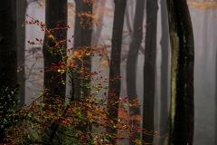 KU-Herbstwald-im-Nebel