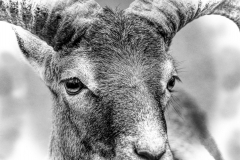 Ausflug Wildpark Granat