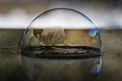 bubble17